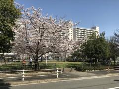 桜の花にあやかって